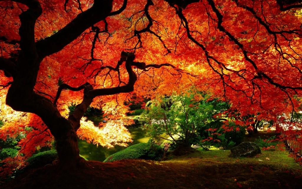 maple-tree-shelter-1280x800